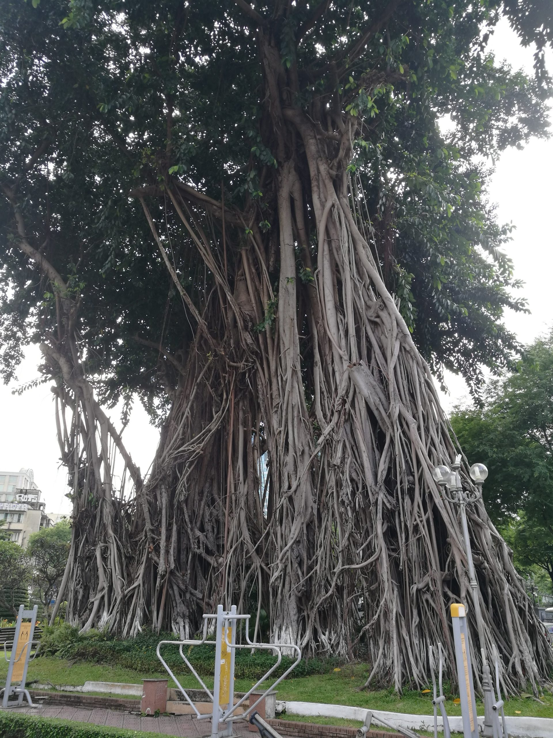 Parque-Bách-Tùng-Diệp