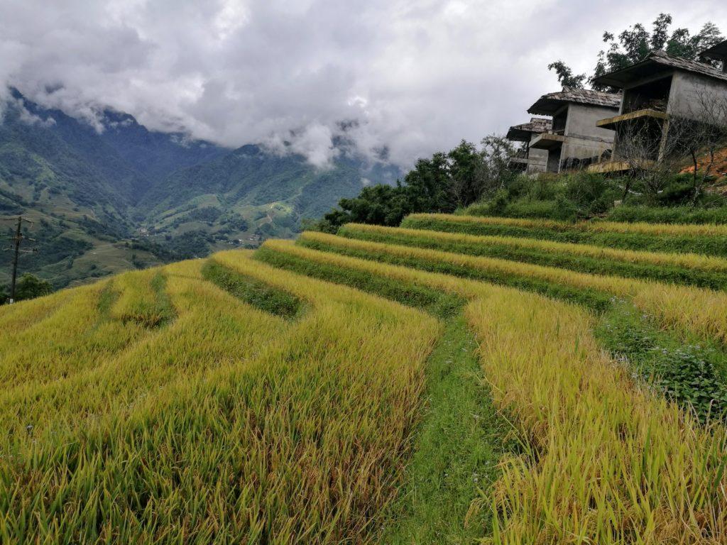 Sapa | Homestay, trekking y arrozales