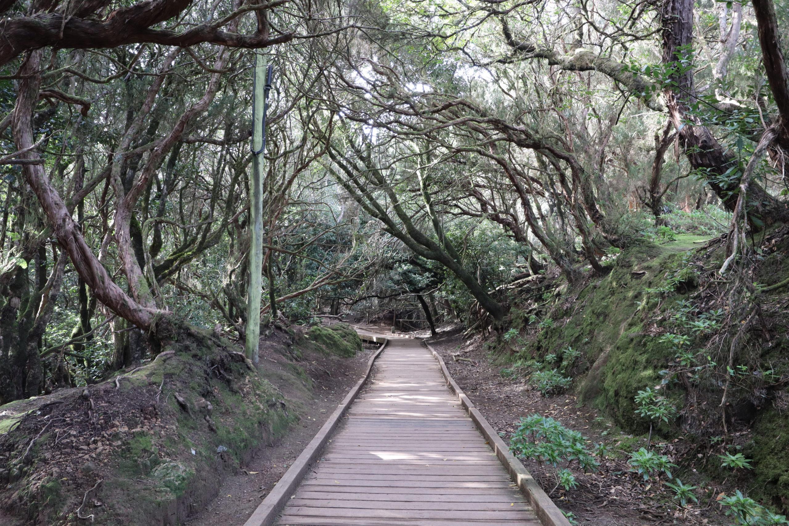 parque-rural-anaga-tenerife