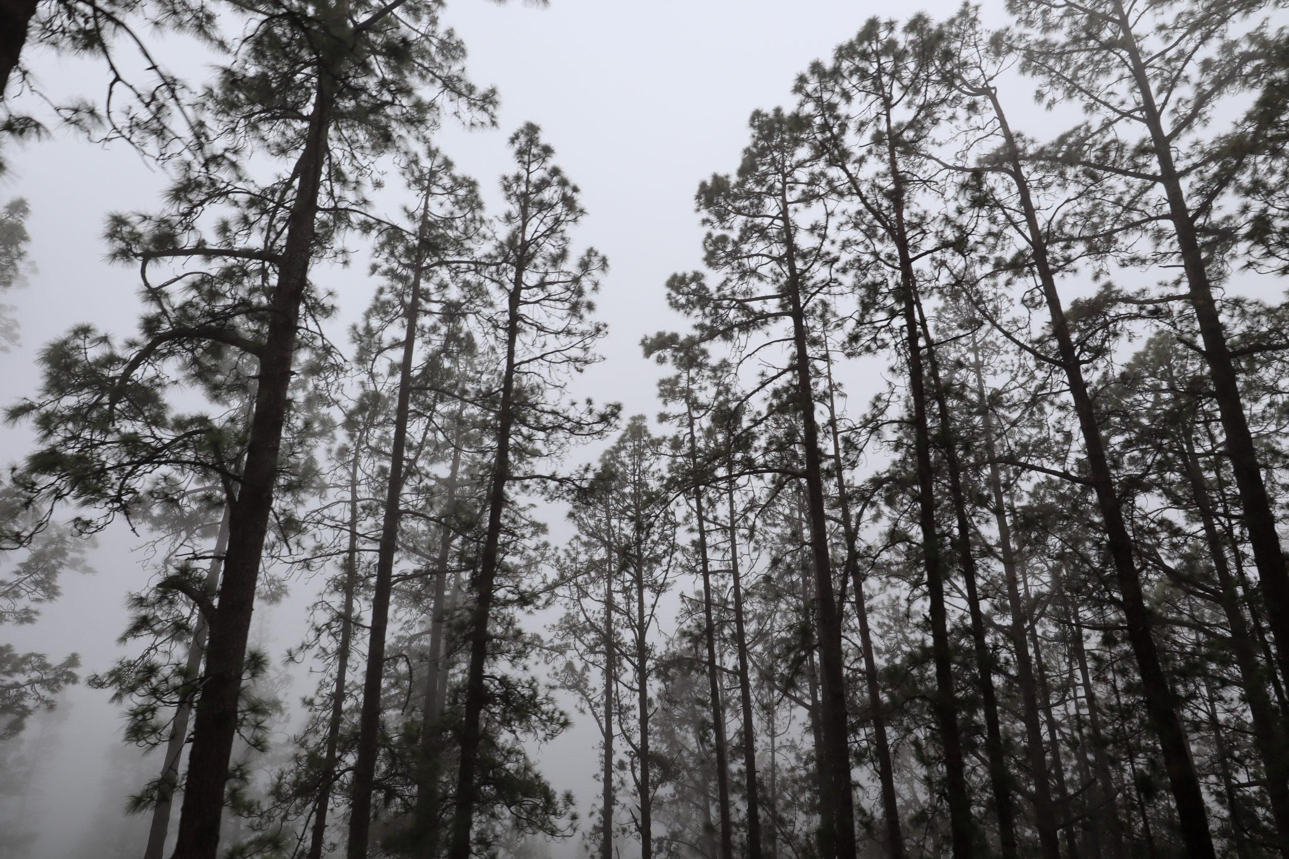 parque-nacional-del-teide
