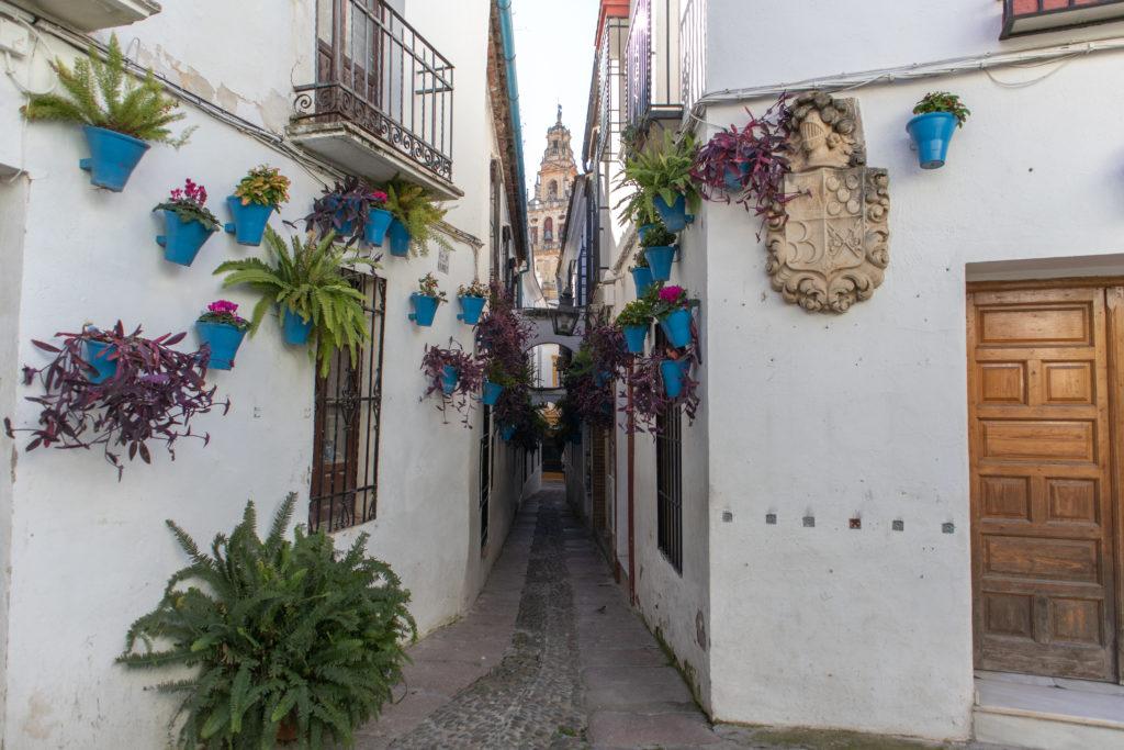 Qué ver en los Patios de Córdoba