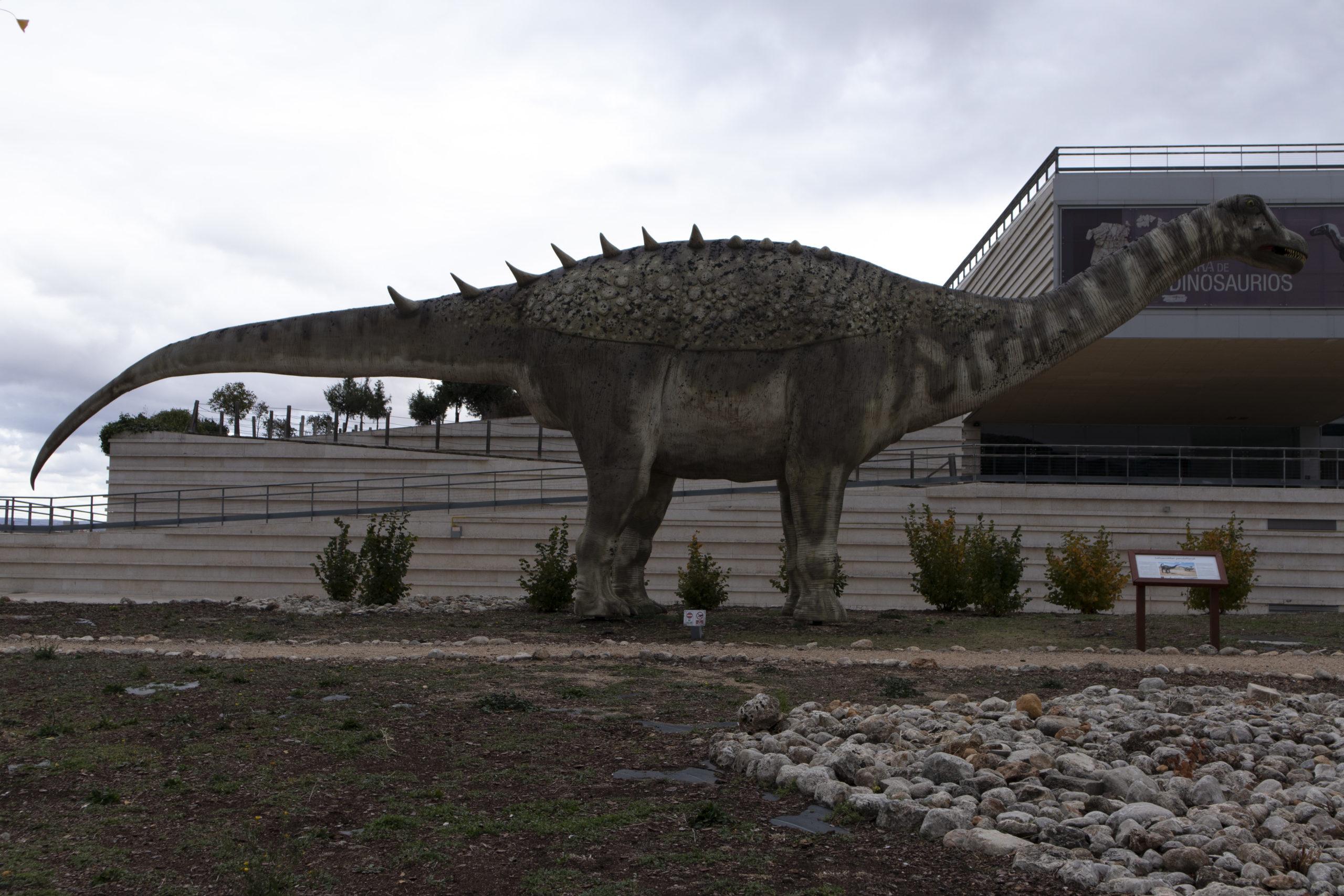museo-paleontológico-Castilla-Mancha-cuenca