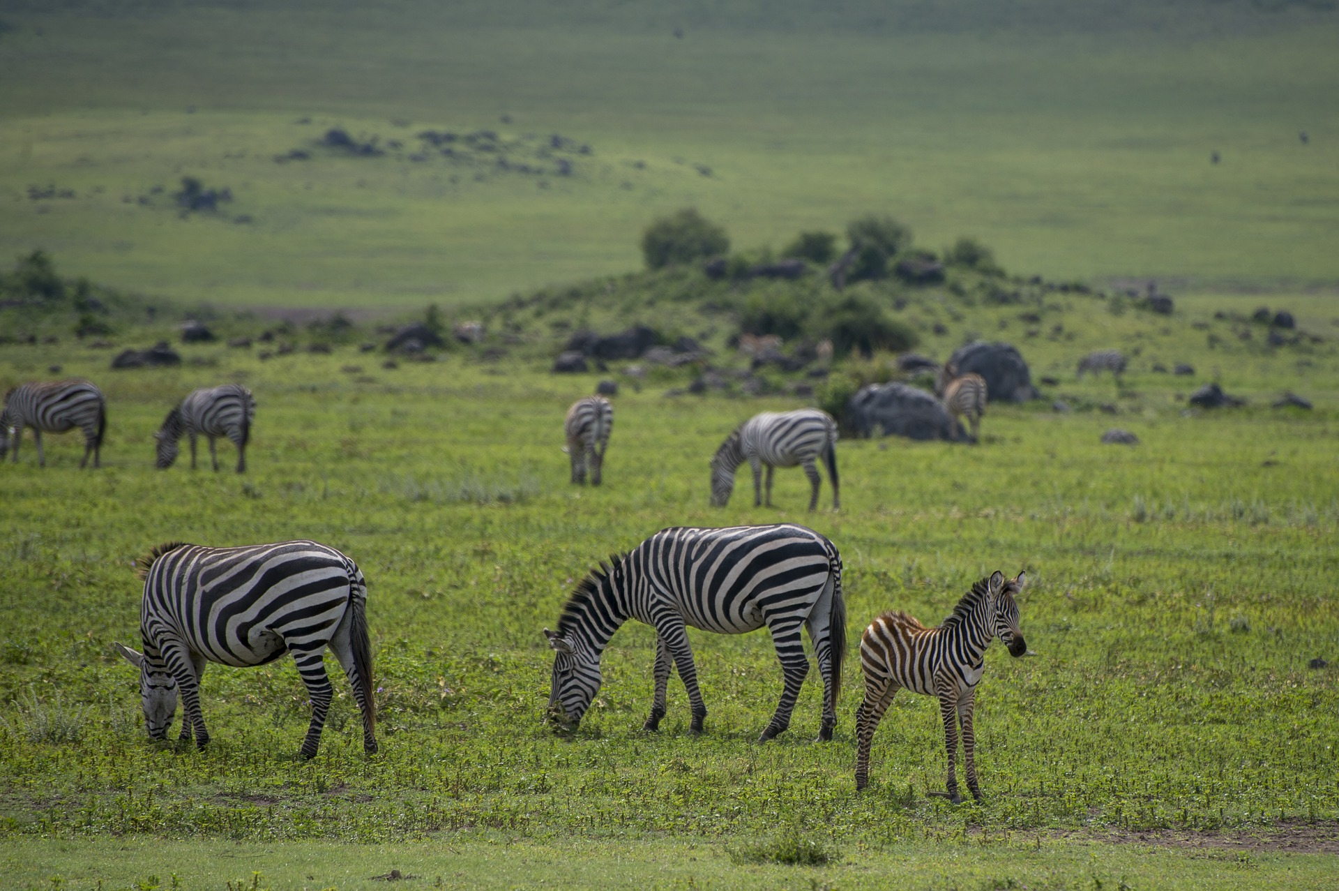 safari-en-tanzania